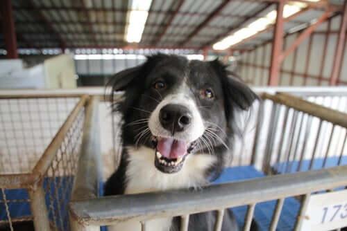 Adopcja porzuconego psa: aspekty do rozważenia