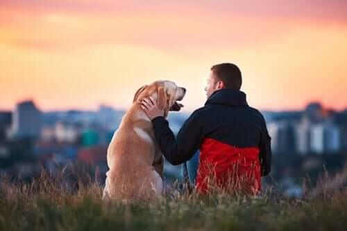 Historie najwierniejszych psów na świecie