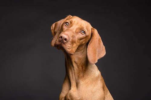 Wpływ pokarmu na zdrowie skóry psów