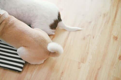 Psi ogon - co Twój pies chce Ci powiedzieć?
