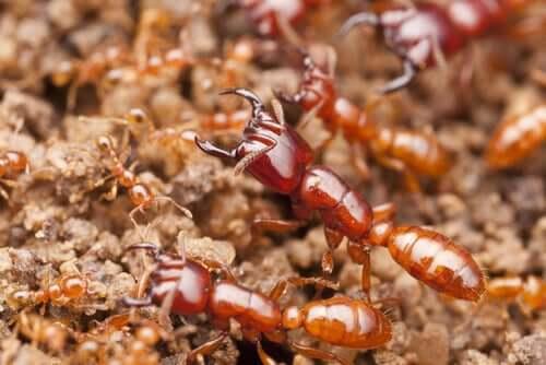 Śmiercionośne owady - poznaj niebezpieczne insekty