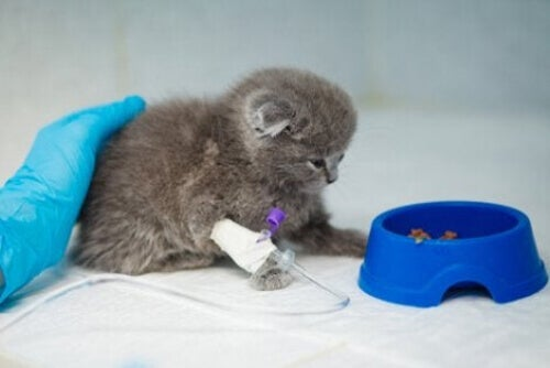 Mały kot nie może przetrwać bez jedzenia