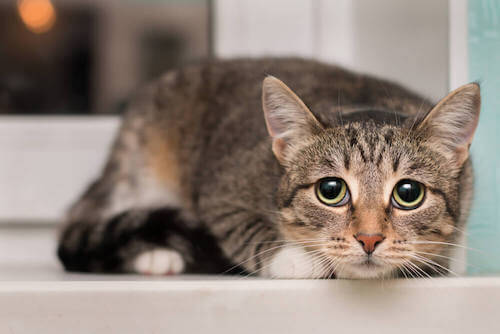 Strach - czy wiesz, czego boją się koty?