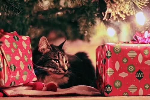 kot w prezentach