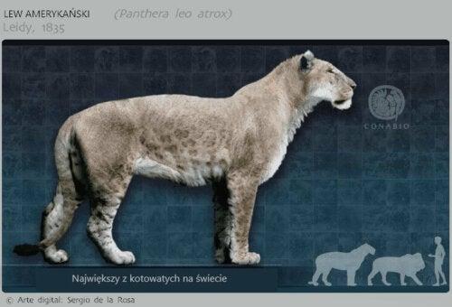 Lew amerykański, wymarłe koty