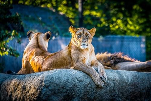 lwice w zoo