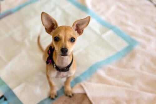 pies i znakowanie miejsc