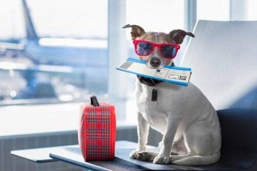Podróżowanie z psem za granicę