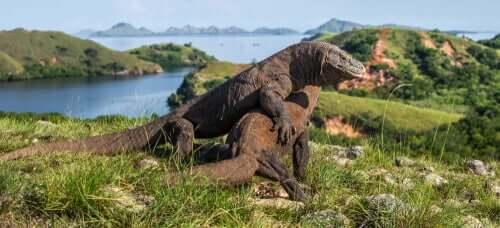 Warany - czy znasz te fascynujące zwierzęta?