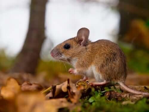 Feromony - dlaczego są ważne w świecie zwierząt?