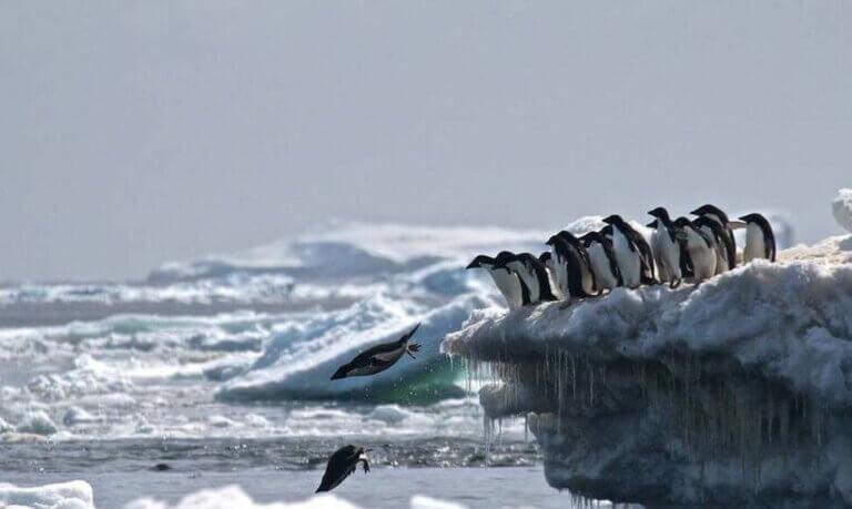Cmentarz pingwinów na Antarktydzie i zmiany klimatu