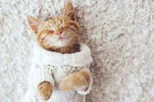 Dlaczego koty nie lubią zimna?