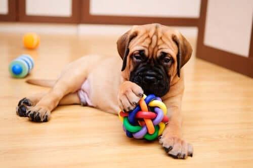 Domowe gry i zabawy dla Twojego psa