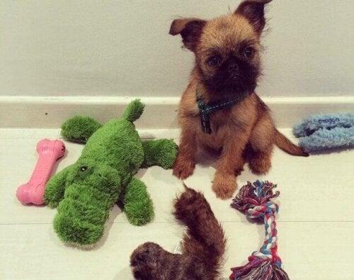 pies z zabawkami