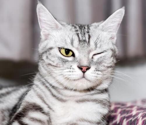 Problemy z oczami u kotów