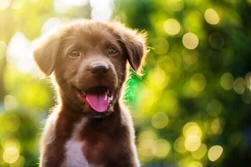 szczeniaki i brązowy pies
