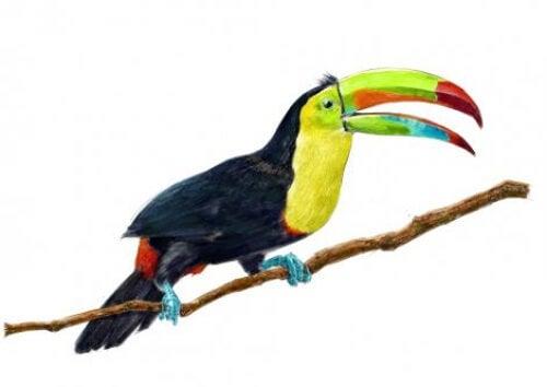 Zwierzęta egzotyczne - tukan