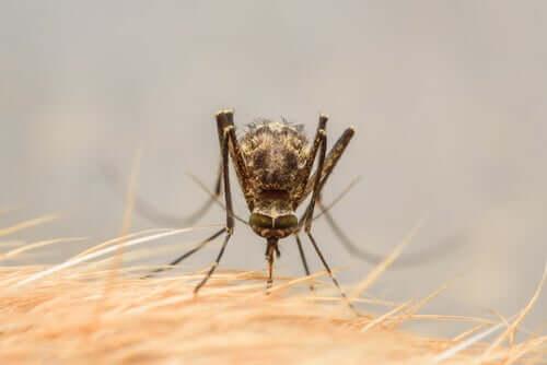 wirus zika komary