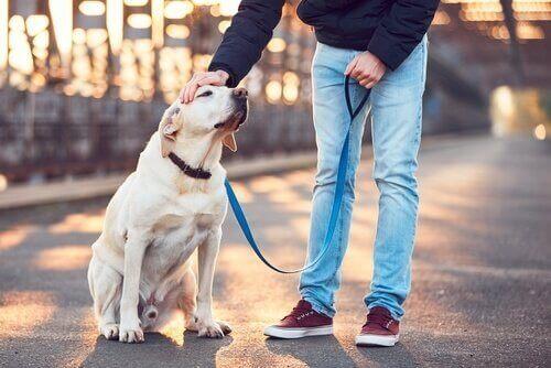 Dog walker - jak wybrać najlepszego dla twojego psa