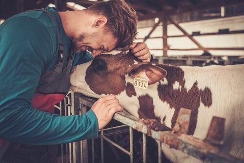 Produkty farmakologiczne dla gospodarstw rolnych