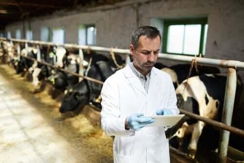 Antybiotyki i odporność u zwierząt gospodarskich