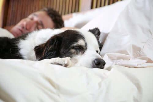 charakter podobny zwierząt i wlascicieli spanie
