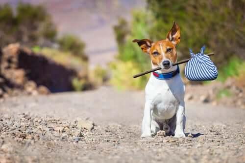 opuszczony pies a zawłaszczenie