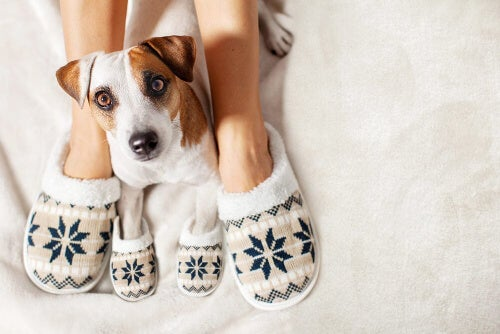 Jak utrzymać ciepłotę ciała zwierzaka w zimie?