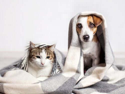 Wychowywanie kotów w towarzystwie psów