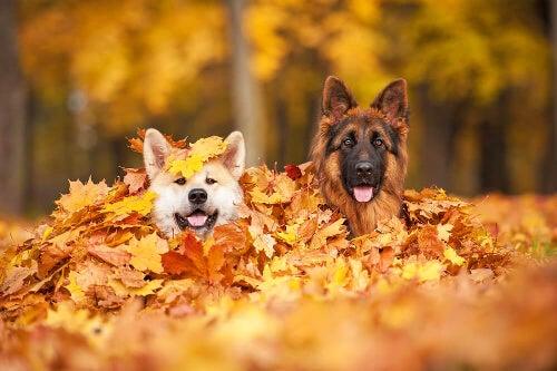 Zagrożenia sezonu jesiennego dla twojego psa