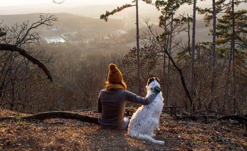 Zachód słońca i kobieta z psem