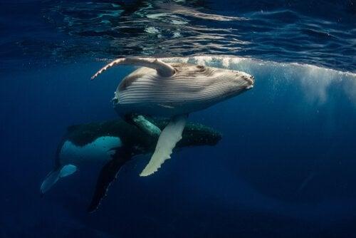 wieloryby czują stres