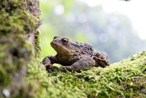 Park Narodowy Doñana żaby