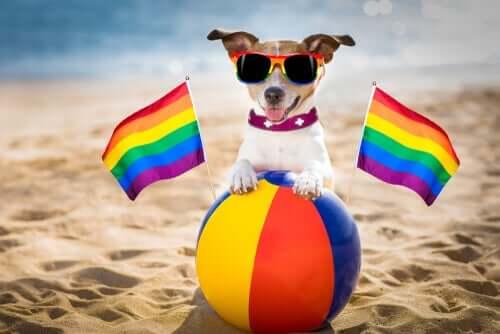 Czy homoseksualizm wśród psów istnieje?