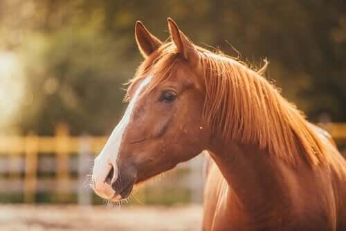 Stres - jak reagują na niego konie?