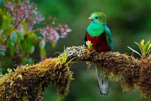 Kwezal - legendarny ptak z Mezoameryki
