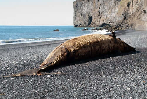 martwy wieloryb na plaży