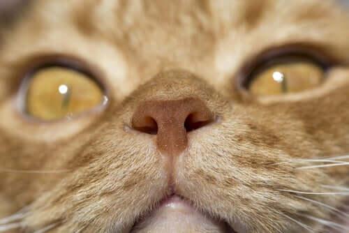 nos kota