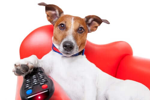 pies z pilotem a reklamy ze zwierzętami