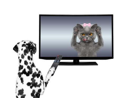 Reklamy telewizyjne z udziałem zwierząt