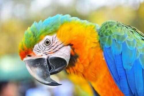Papuga Ara - bardzo inteligentny ptak