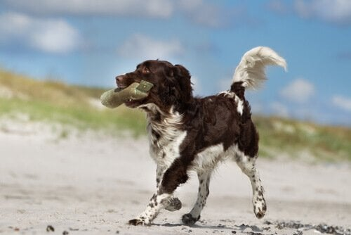 pies z zabawką w pysku