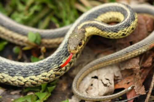 wąż w lesie