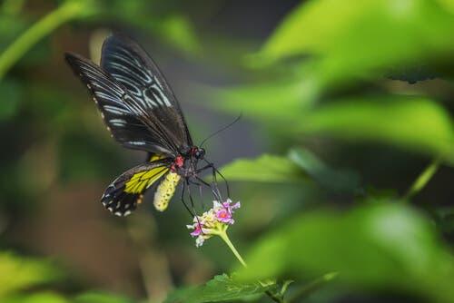 Poznaj największe motyle na świecie