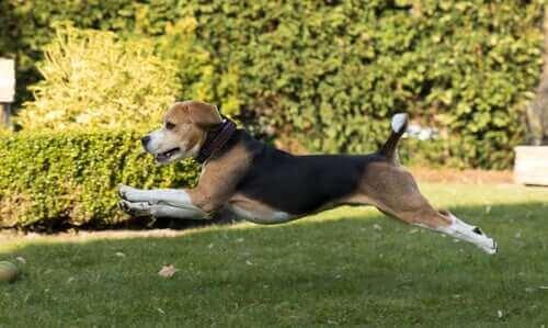 Osteopatia zwierząt: czym jest i co leczy?