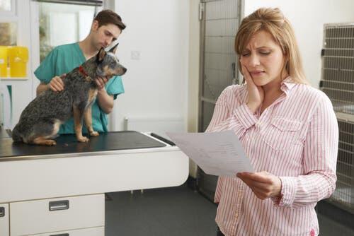 Ubezpieczenia dla zwierząt domowych