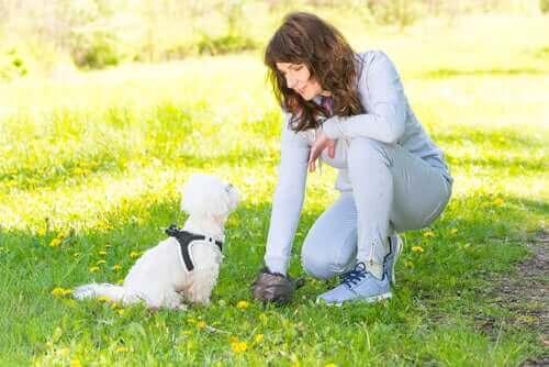 Psy można rozpoznać po ich odchodach!