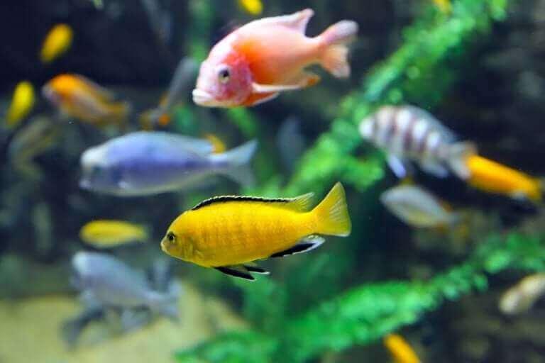 Kolorowe ryby akwariowe