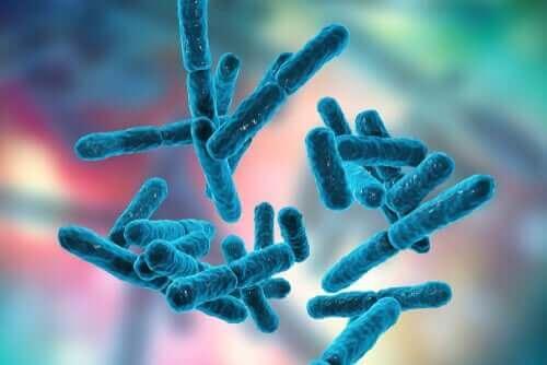 zbliżenie na bakterie