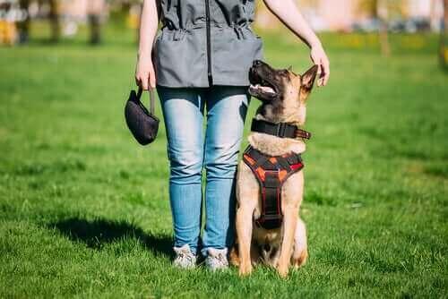 Wyszkolony pies kontra pies mediator